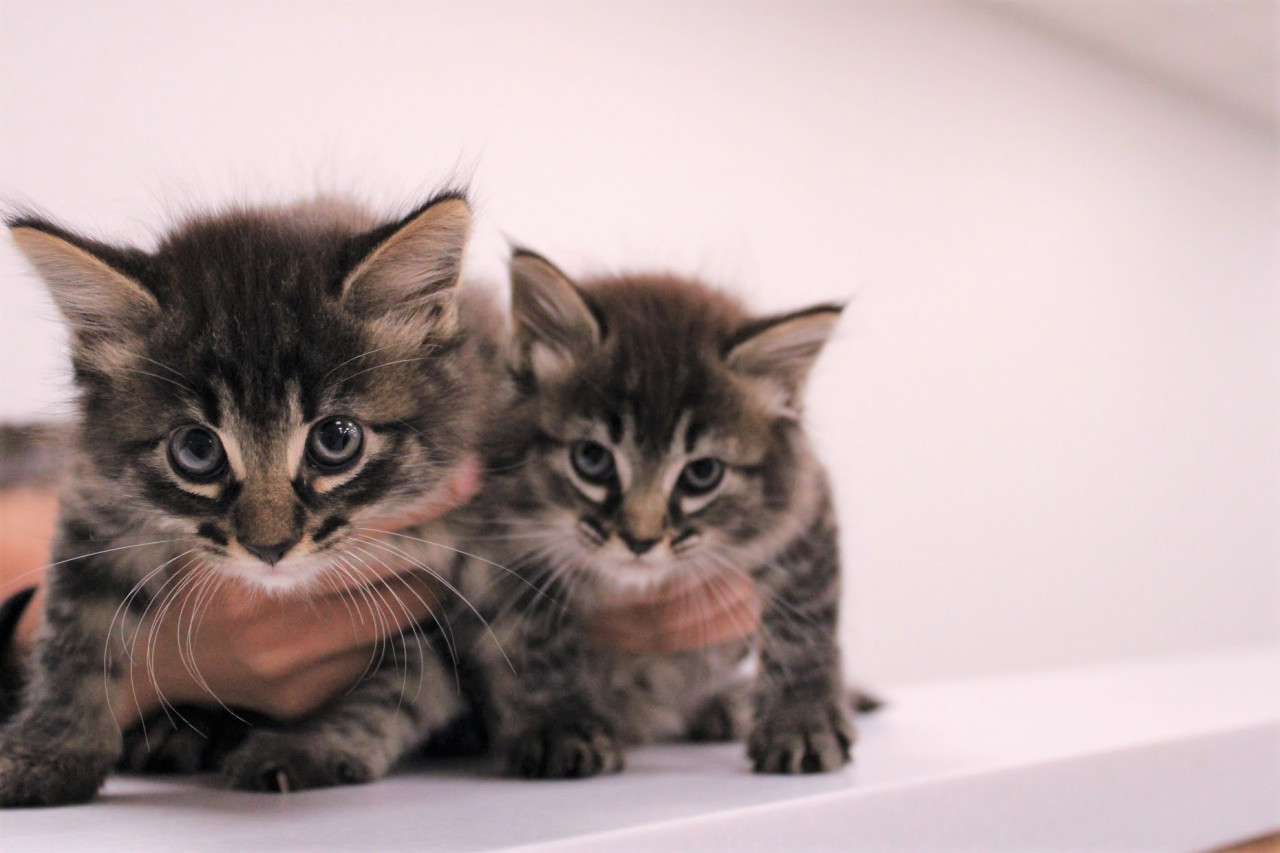Two-Kittens_042021